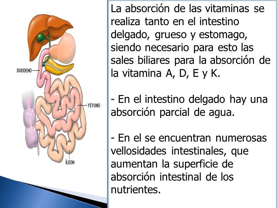 La absorción de las vitaminas se realiza tanto en el intestino delgado, grueso y estomago, siendo necesario para esto las sales biliares para la absorción de la vitamina A, D, E y K.