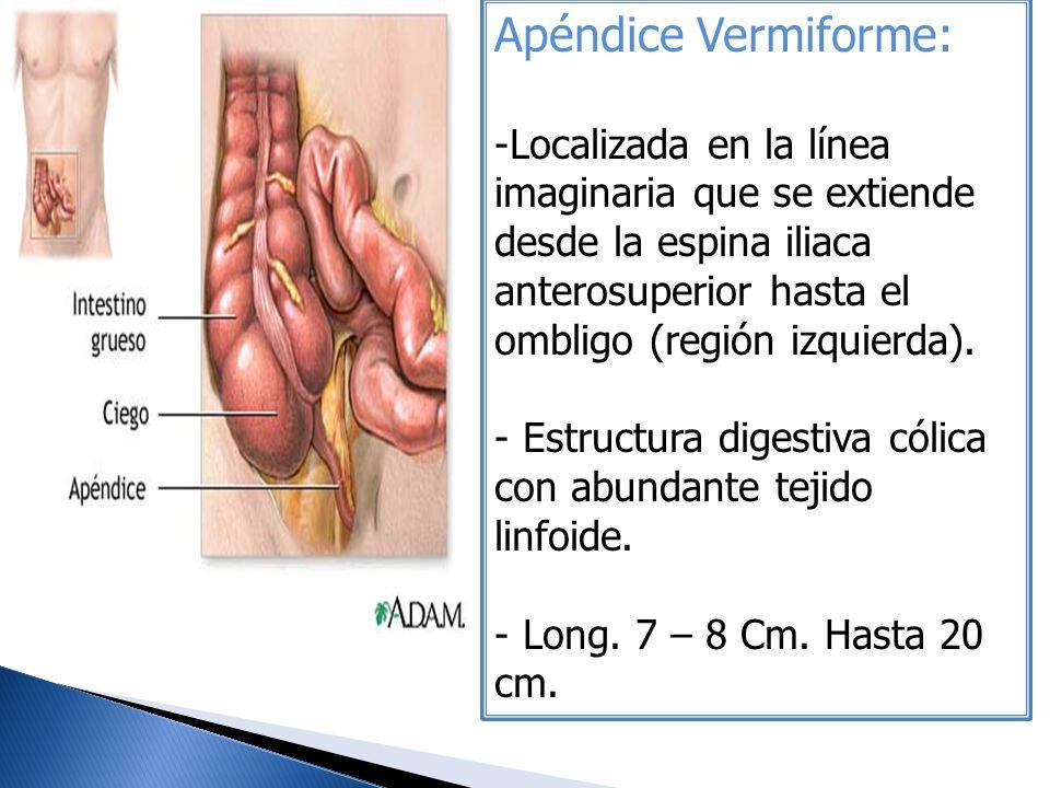 Apéndice Vermiforme: Localizada en la línea imaginaria que se extiende desde la espina iliaca anterosuperior hasta el ombligo (región izquierda).