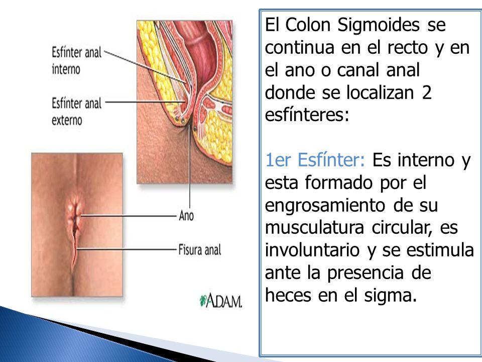 El Colon Sigmoides se continua en el recto y en el ano o canal anal donde se localizan 2 esfínteres: