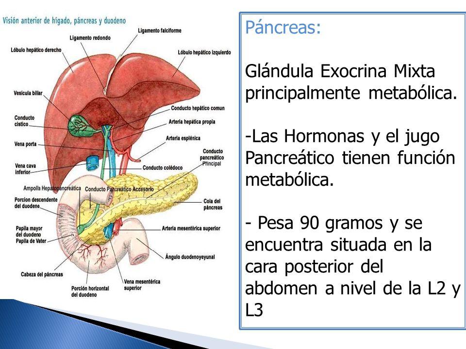 Páncreas: Glándula Exocrina Mixta principalmente metabólica. Las Hormonas y el jugo Pancreático tienen función metabólica.
