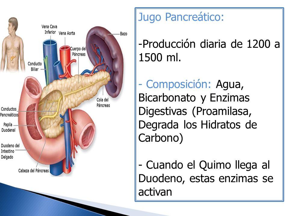Jugo Pancreático: Producción diaria de 1200 a 1500 ml.