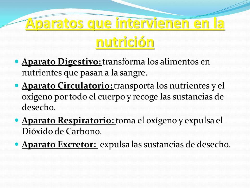 Aparatos que intervienen en la nutrición