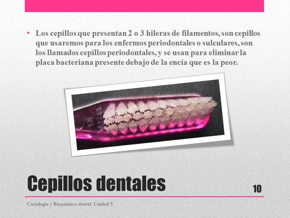 Los cepillos que presentan 2 o 3 hileras de filamentos, son cepillos que usaremos para los enfermos periodontales o sulculares, son los llamados cepillos periodontales, y se usan para eliminar la placa bacteriana presente debajo de la encía que es la peor.