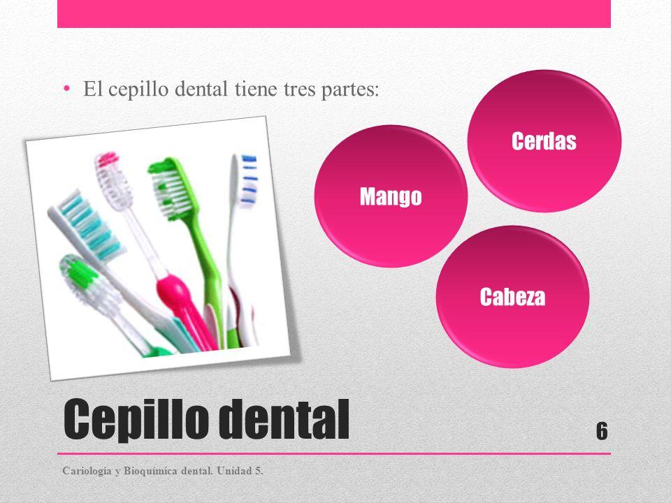 Cepillo dental El cepillo dental tiene tres partes: Cerdas Mango