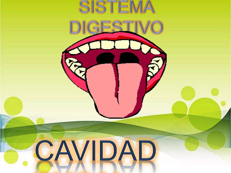 SISTEMA DIGESTIVO CAVIDAD BUCAL