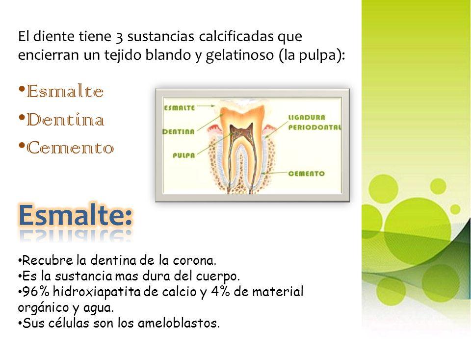 Esmalte: Esmalte Dentina Cemento