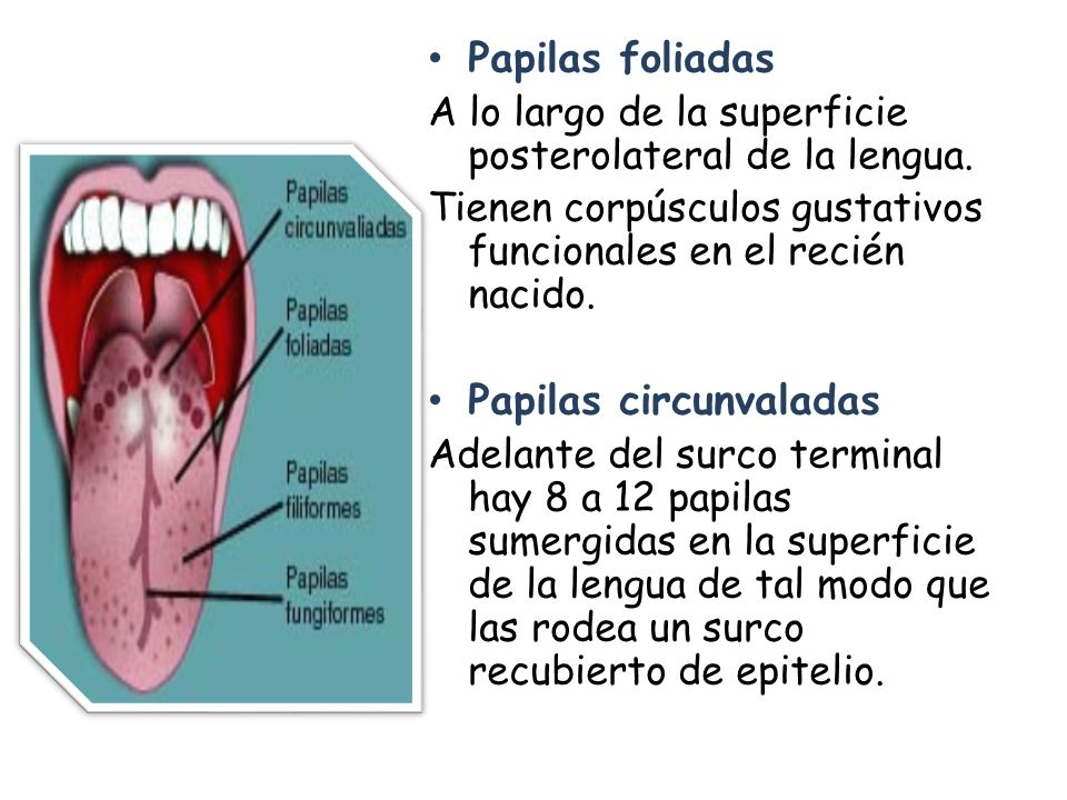 SISTEMA DIGESTIVO CAVIDAD BUCAL. - ppt video online descargar