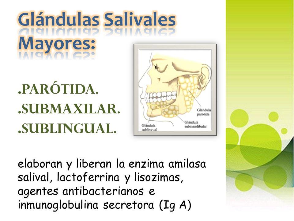 Glándulas Salivales Mayores:. Parótida. Submaxilar. Sublingual