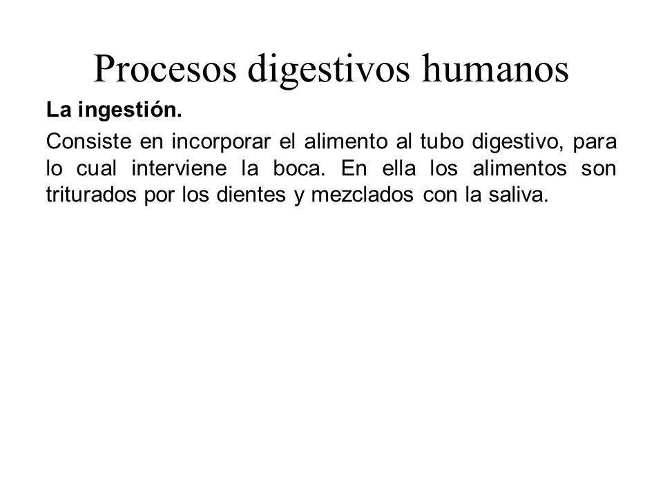 Procesos digestivos humanos