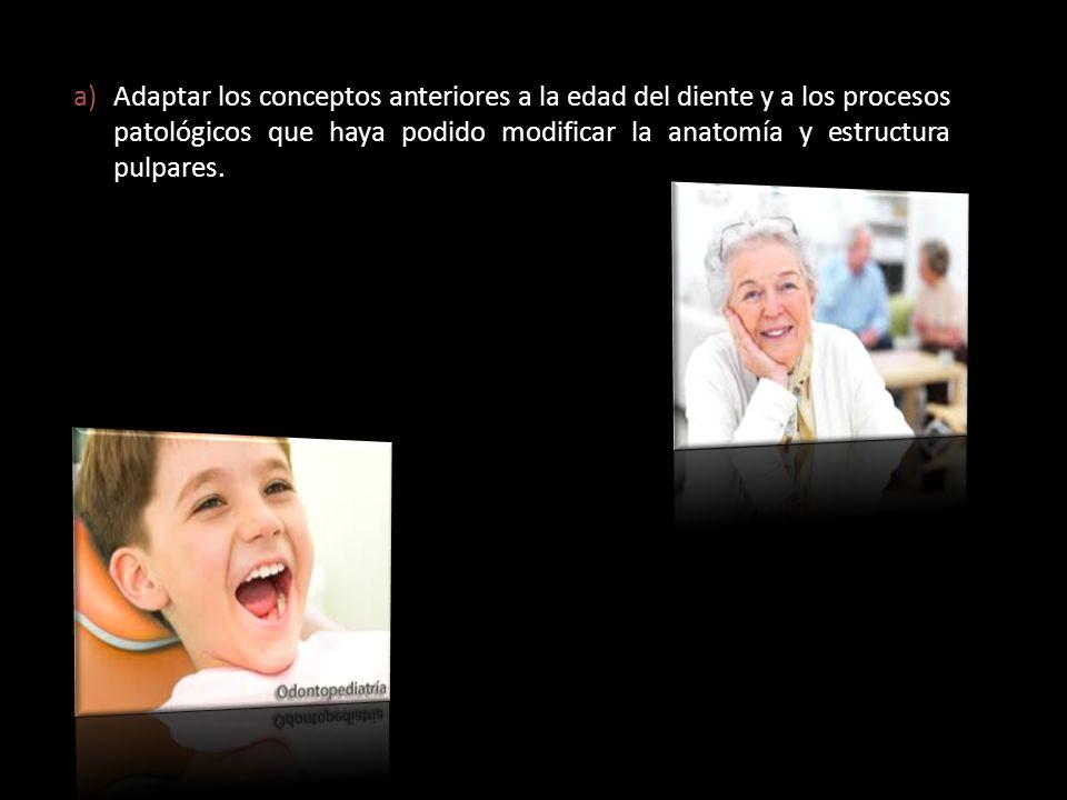 Adaptar los conceptos anteriores a la edad del diente y a los procesos patológicos que haya podido modificar la anatomía y estructura pulpares.
