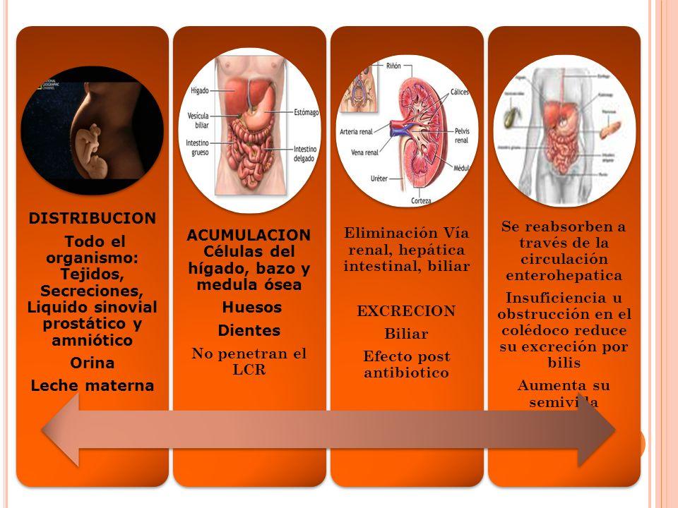ACUMULACION Células del hígado, bazo y medula ósea