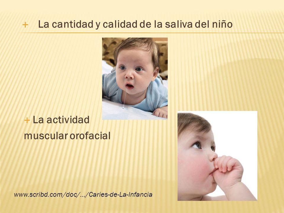 La cantidad y calidad de la saliva del niño