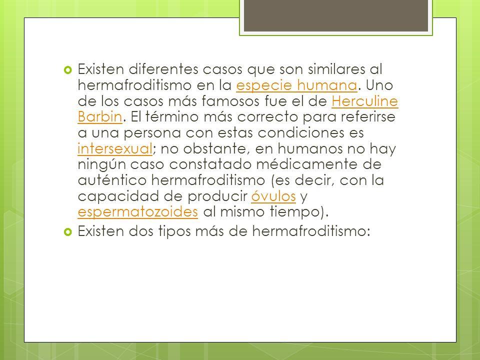 Existen diferentes casos que son similares al hermafroditismo en la especie humana. Uno de los casos más famosos fue el de Herculine Barbin. El término más correcto para referirse a una persona con estas condiciones es intersexual; no obstante, en humanos no hay ningún caso constatado médicamente de auténtico hermafroditismo (es decir, con la capacidad de producir óvulos y espermatozoides al mismo tiempo).