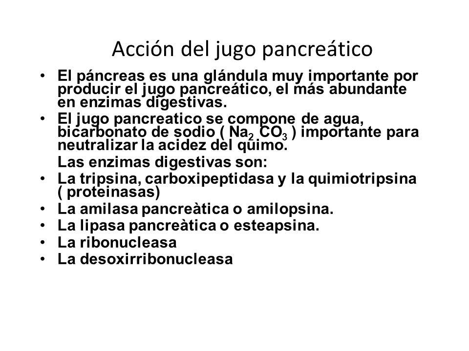 Acción del jugo pancreático