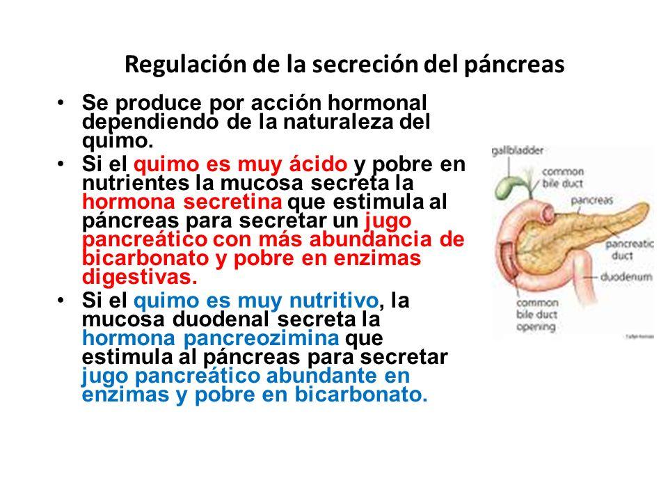 Regulación de la secreción del páncreas
