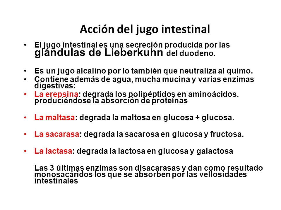 Acción del jugo intestinal