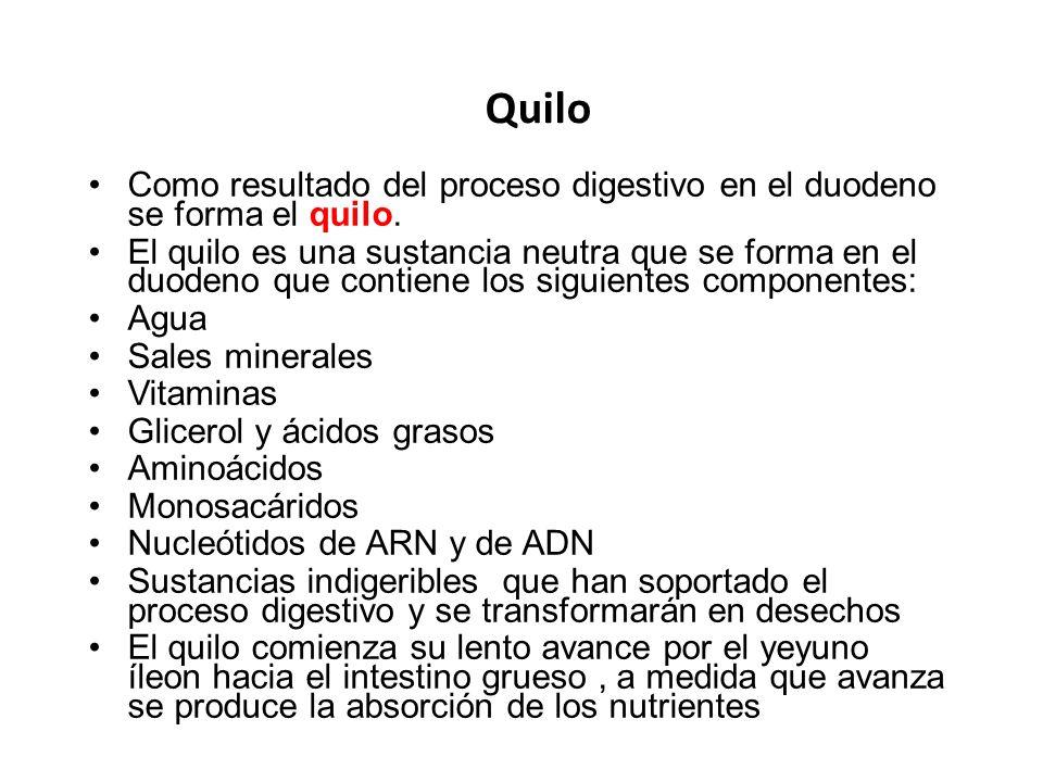Quilo Como resultado del proceso digestivo en el duodeno se forma el quilo.