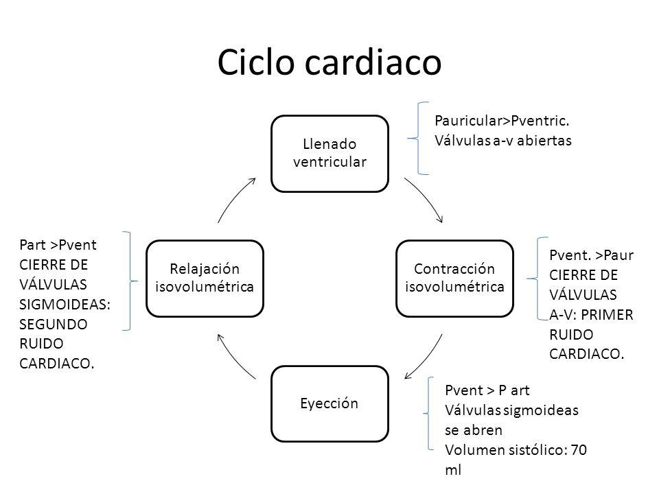 Ciclo cardiaco Pauricular>Pventric. Válvulas a-v abiertas