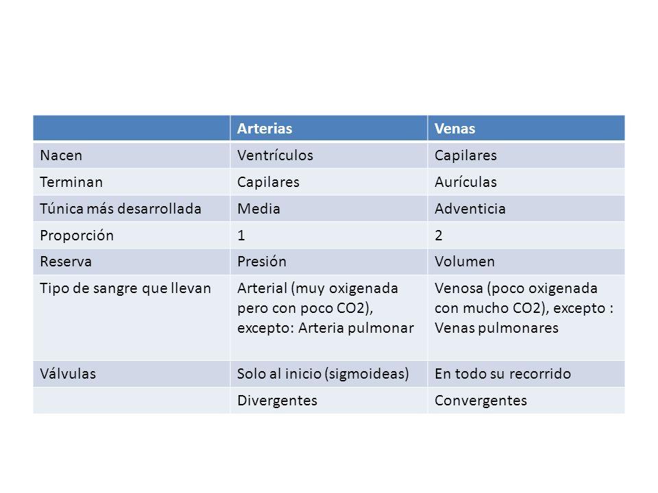 Arterias Venas. Nacen. Ventrículos. Capilares. Terminan. Aurículas. Túnica más desarrollada. Media.