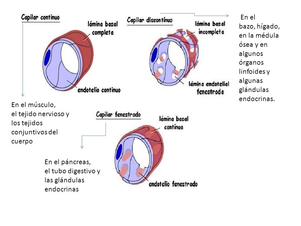 En el bazo, hígado, en la médula ósea y en algunos órganos linfoides y algunas glándulas endocrinas.