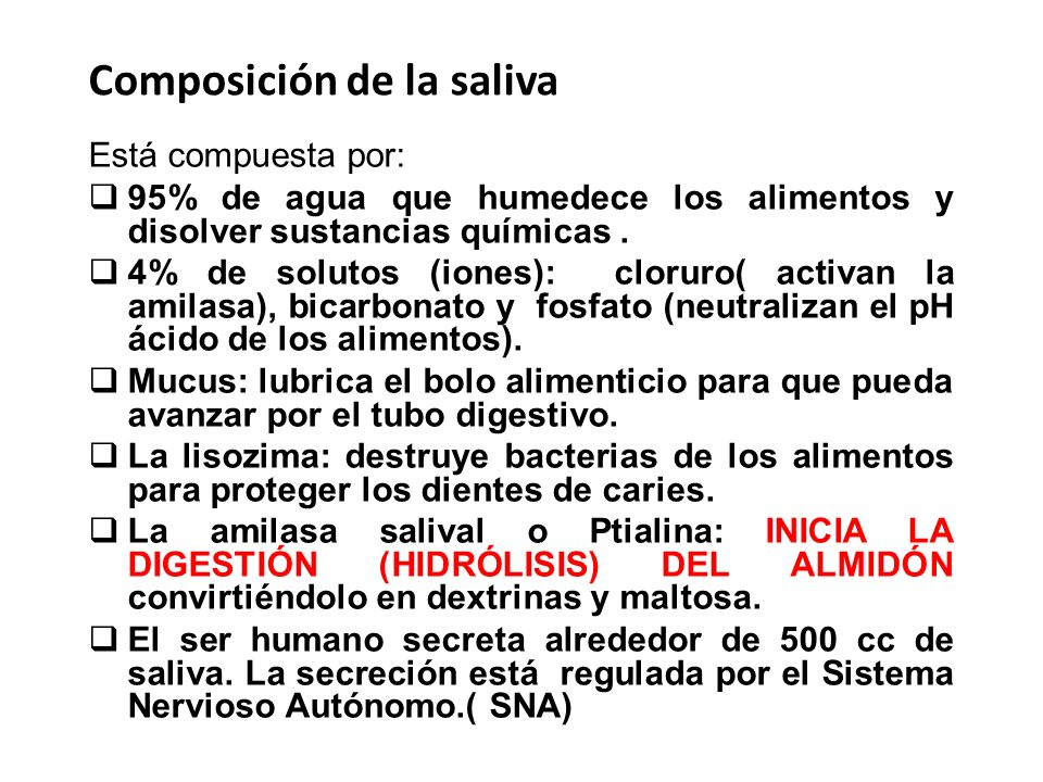 Composición de la saliva