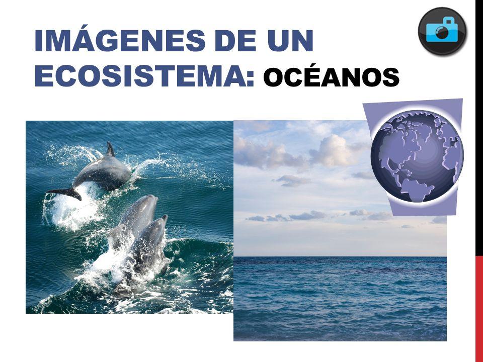 IMáGENes de un ecosistema: Océanos