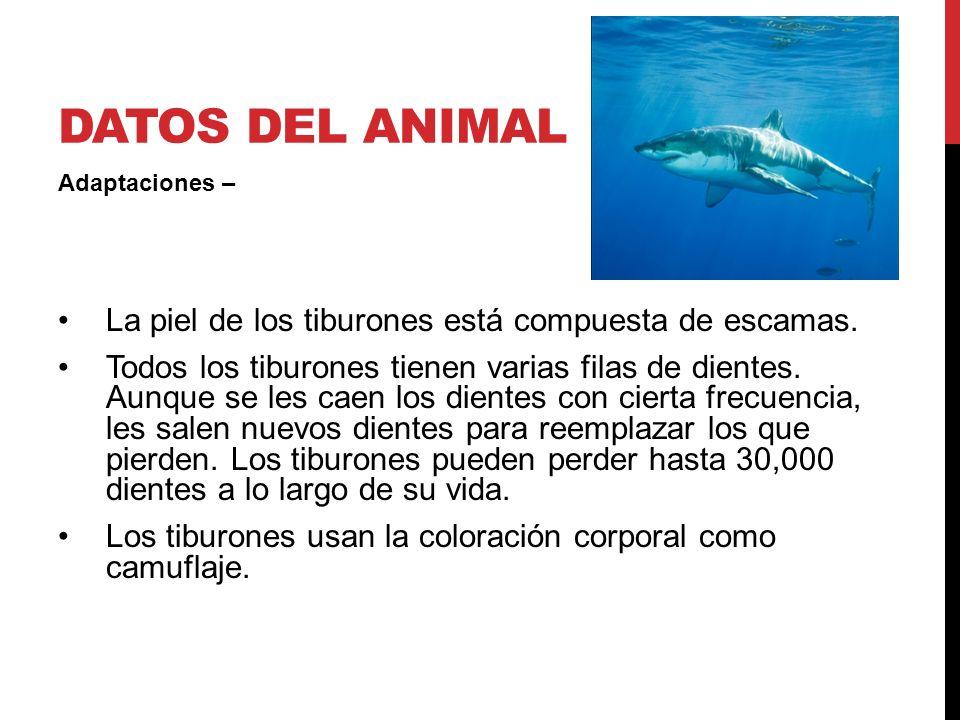 Datos del animal La piel de los tiburones está compuesta de escamas.