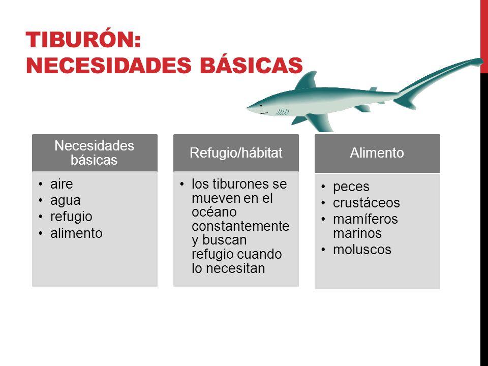 tiburón: necesidades básicas