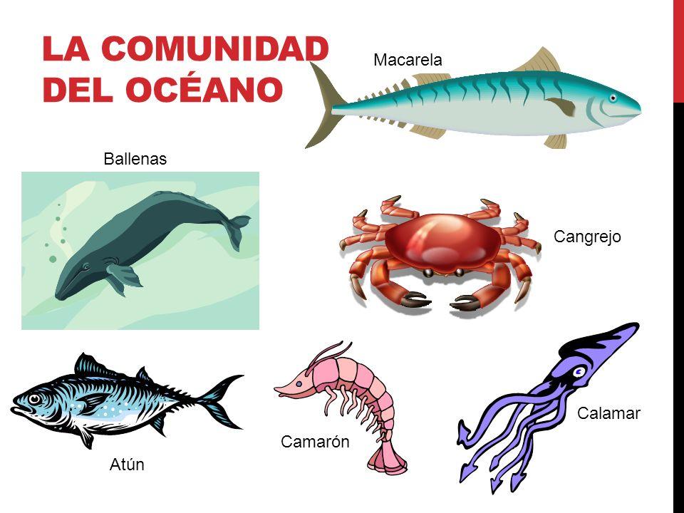 La comunidad del océano