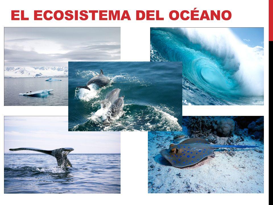 El ecosistema del océano