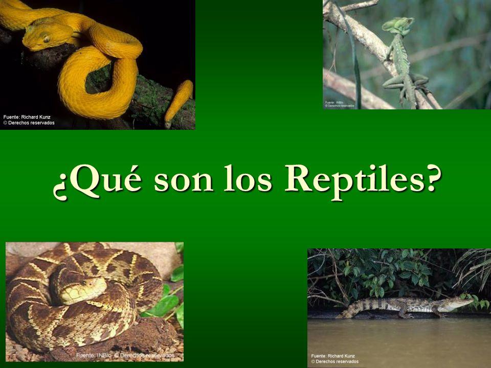 ¿Qué son los Reptiles