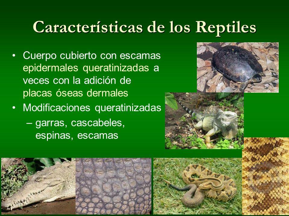 Q Son Los Reptiles ¿Qué son los...
