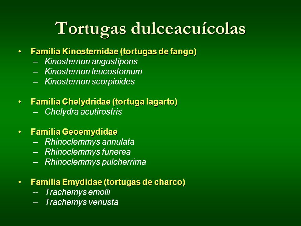 Tortugas dulceacuícolas