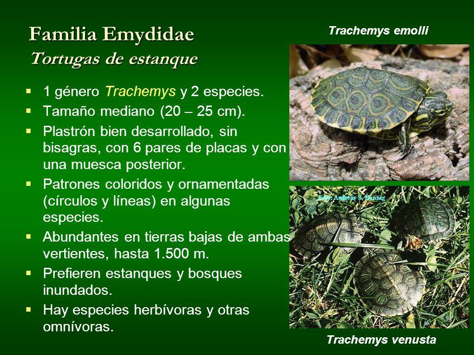 Familia Emydidae Tortugas de estanque