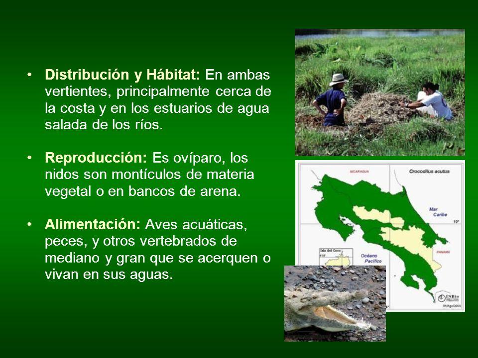 Distribución y Hábitat: En ambas vertientes, principalmente cerca de la costa y en los estuarios de agua salada de los ríos.