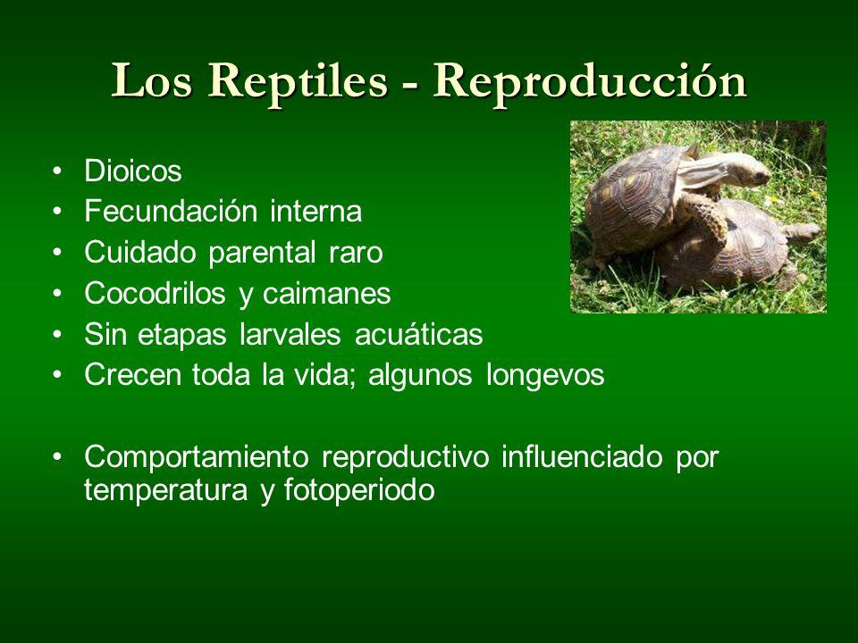 Los Reptiles - Reproducción