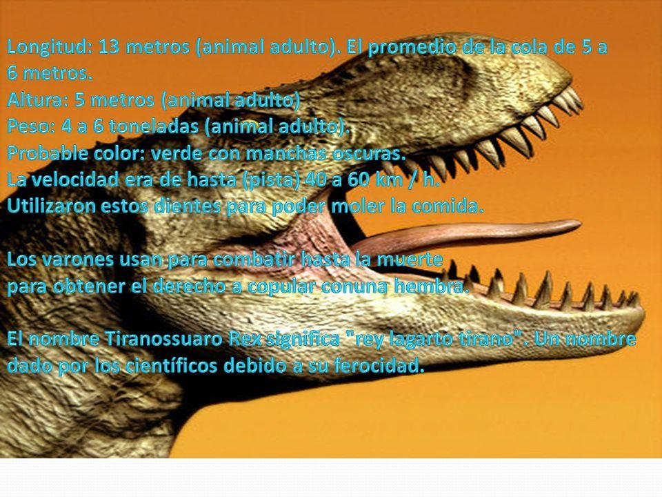 Longitud: 13 metros (animal adulto)