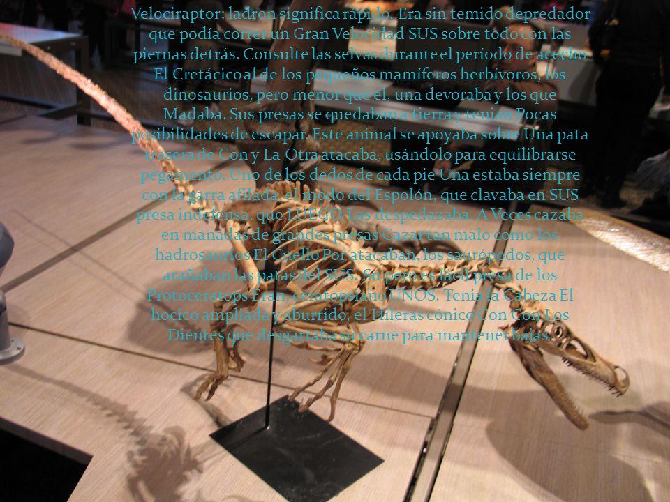 Velociraptor: ladron significa rápido