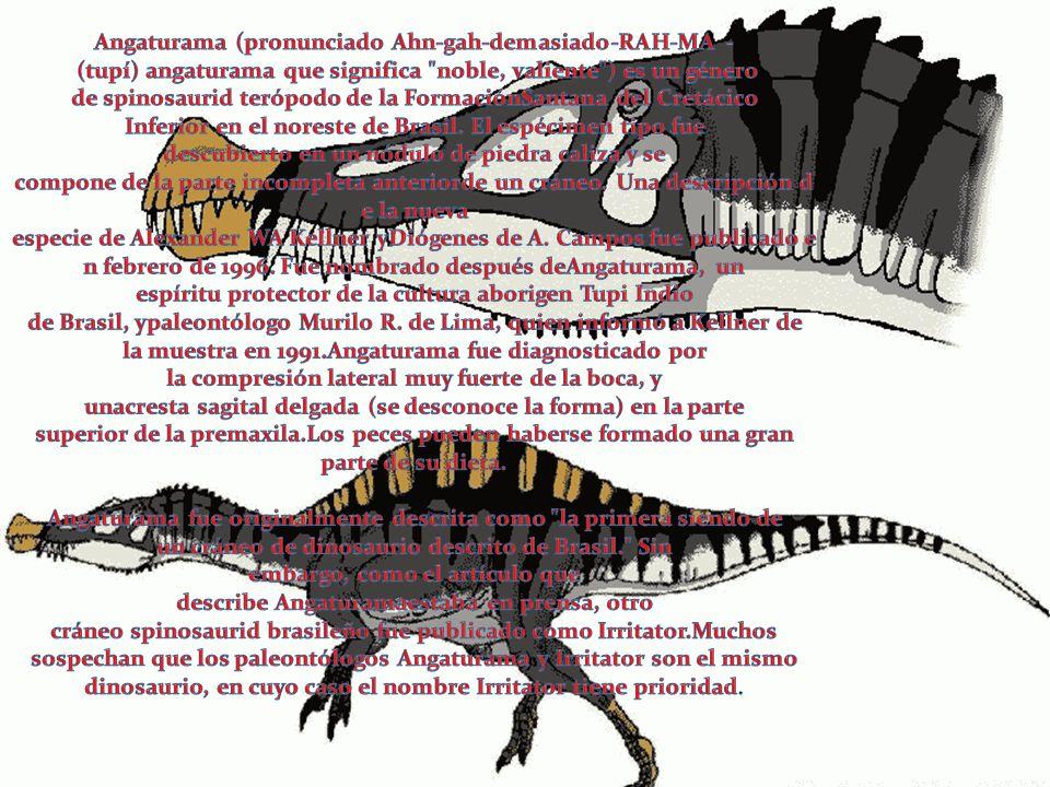 Angaturama (pronunciado Ahn-gah-demasiado-RAH-MA - (tupí) angaturama que significa noble, valiente ) es un género de spinosaurid terópodo de la FormaciónSantana del Cretácico Inferior en el noreste de Brasil. El espécimen tipo fue descubierto en un nódulo de piedra caliza y se compone de la parte incompleta anteriorde un cráneo. Una descripción de la nueva especie de Alexander WA Kellner yDiógenes de A. Campos fue publicado en febrero de 1996. Fue nombrado después deAngaturama, un espíritu protector de la cultura aborigen Tupi Indio de Brasil, ypaleontólogo Murilo R. de Lima, quien informó a Kellner de la muestra en 1991.Angaturama fue diagnosticado por la compresión lateral muy fuerte de la boca, y unacresta sagital delgada (se desconoce la forma) en la parte superior de la premaxila.Los peces pueden haberse formado una gran parte de su dieta.