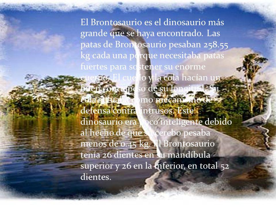 El Brontosaurio es el dinosaurio más grande que se haya encontrado