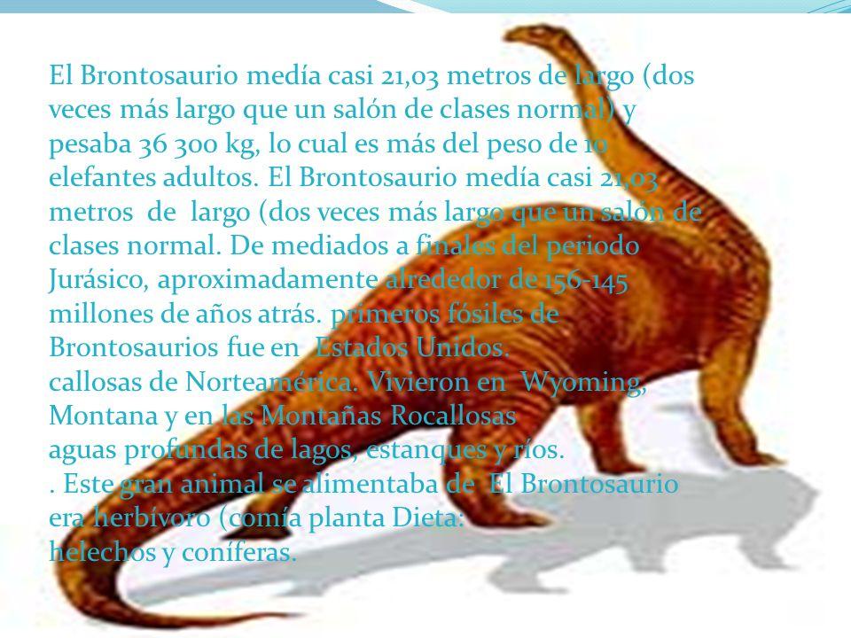El Brontosaurio medía casi 21,03 metros de largo (dos veces más largo que un salón de clases normal) y pesaba 36 300 kg, lo cual es más del peso de 10 elefantes adultos. El Brontosaurio medía casi 21,03 metros de largo (dos veces más largo que un salón de clases normal. De mediados a finales del periodo Jurásico, aproximadamente alrededor de 156-145 millones de años atrás. primeros fósiles de Brontosaurios fue en Estados Unidos.