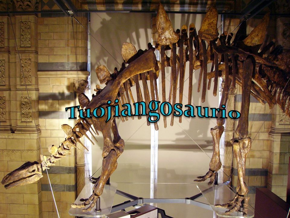 Tuojiangosaurio