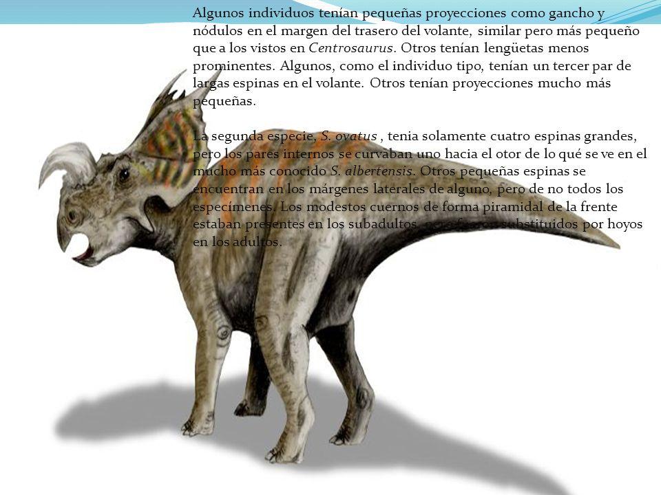 Algunos individuos tenían pequeñas proyecciones como gancho y nódulos en el margen del trasero del volante, similar pero más pequeño que a los vistos en Centrosaurus. Otros tenían lengüetas menos prominentes. Algunos, como el individuo tipo, tenían un tercer par de largas espinas en el volante. Otros tenían proyecciones mucho más pequeñas.