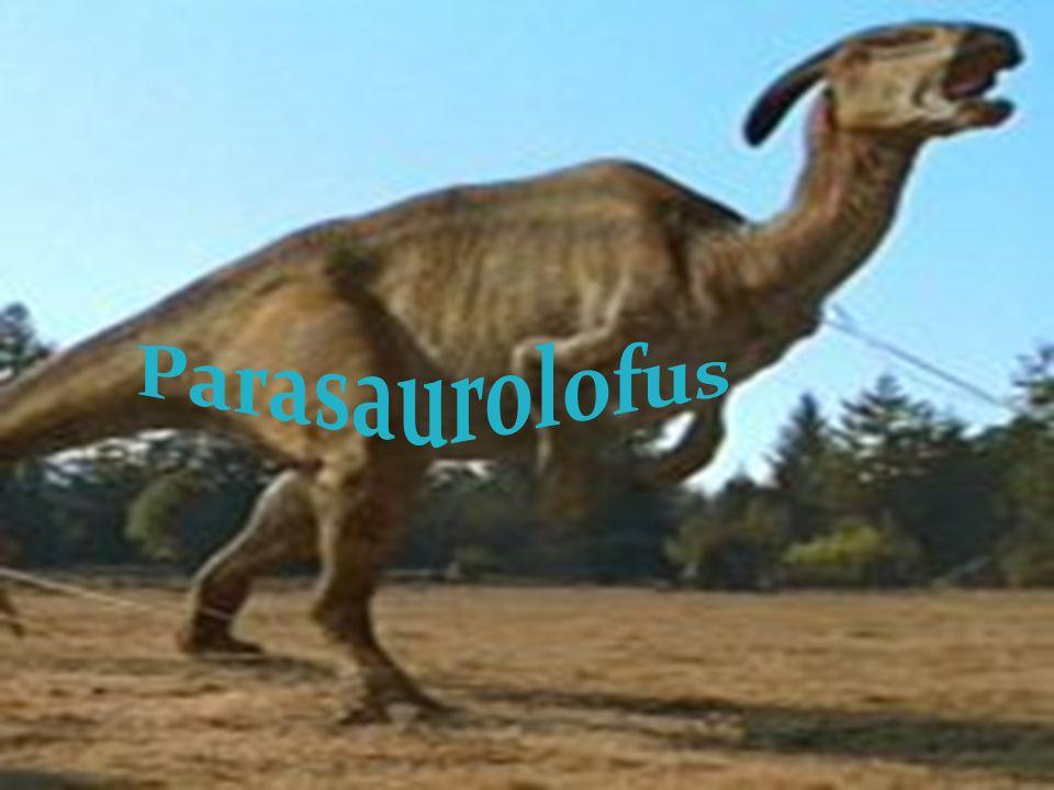 Parasaurolofus