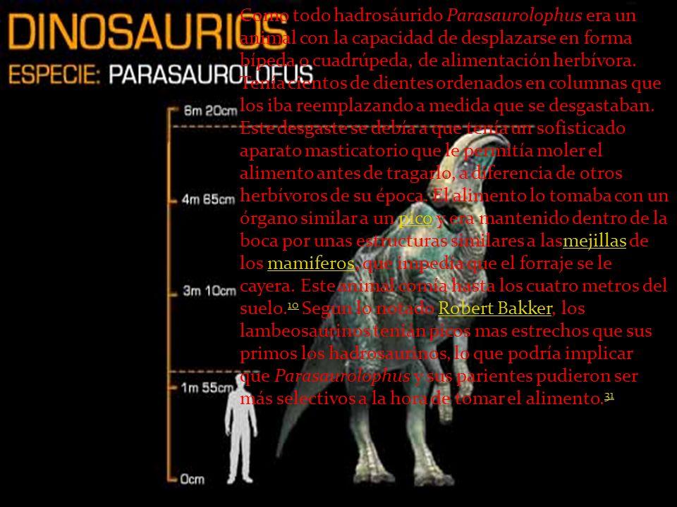 Como todo hadrosáurido Parasaurolophus era un animal con la capacidad de desplazarse en forma bípeda o cuadrúpeda, de alimentación herbívora.