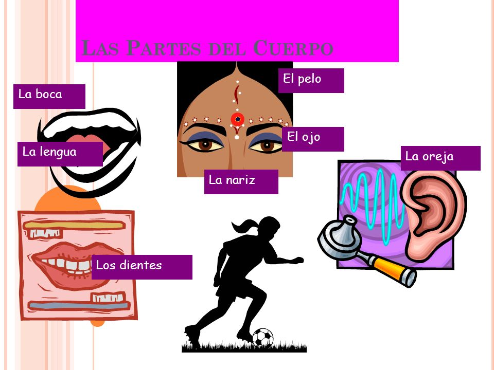 Las Partes del Cuerpo El pelo La boca El ojo La lengua La oreja