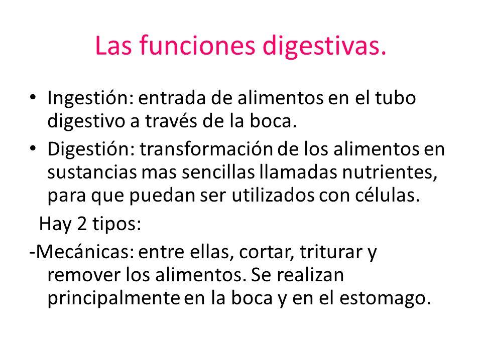 Las funciones digestivas.