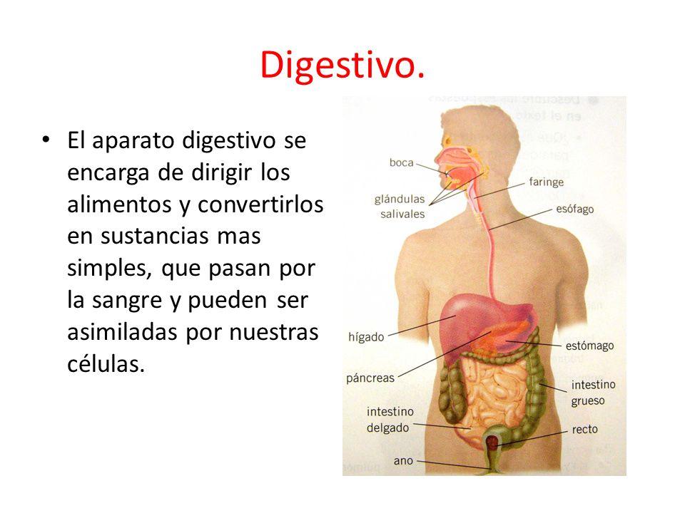 Digestivo.