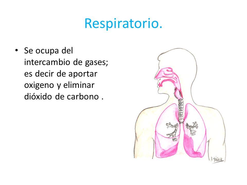 Respiratorio.