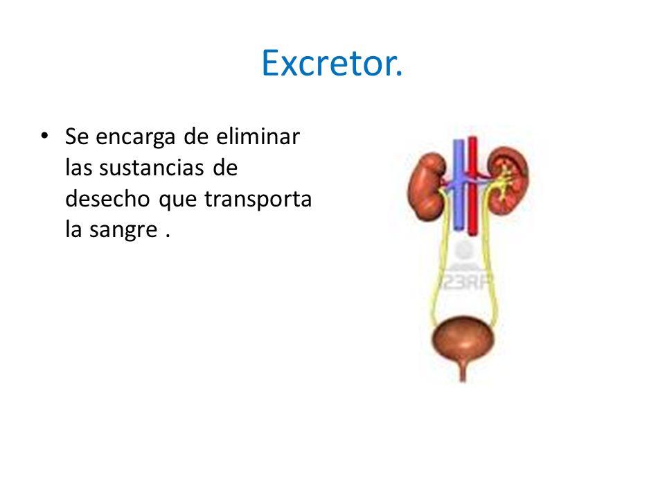 Excretor. Se encarga de eliminar las sustancias de desecho que transporta la sangre .